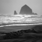 Kelp, Cannon Beach Oregon